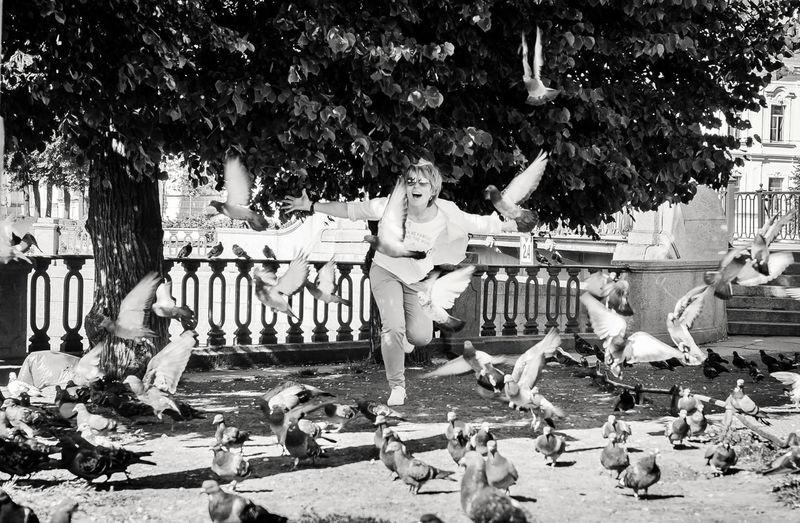 Flock of birds in park