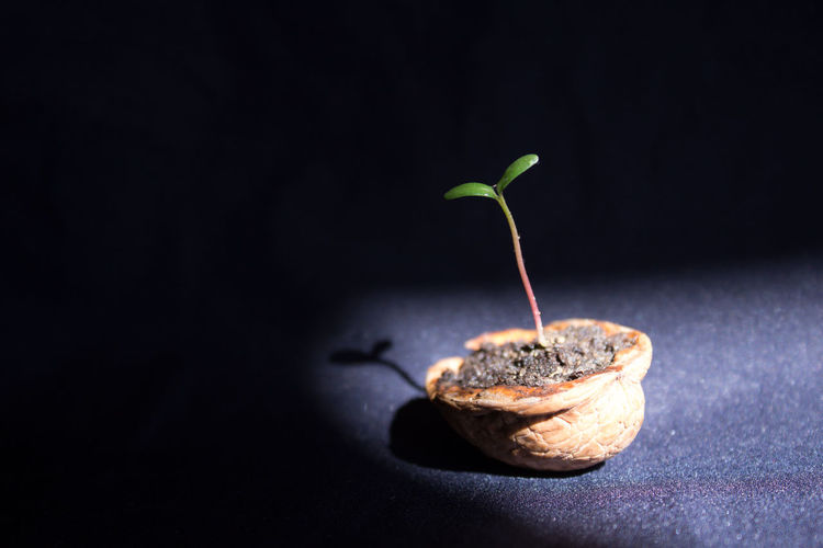 Life Plant Life