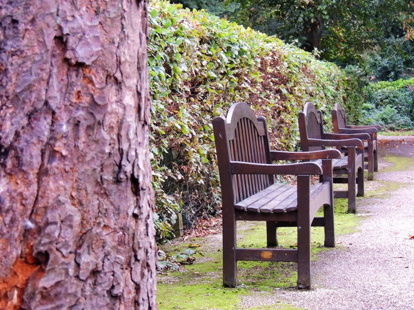 autumn mood Autumn Collection 3 In A Row 3 In A Row Hedge Chair Seat Plant Tree Nature No People Day Wood - Material Tree Trunk Trunk Empty Growth Absence Bench Outdoors Park Relaxation Beauty In Nature Solid