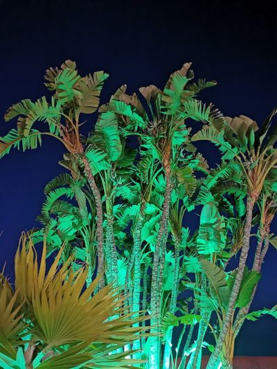 Low angle view of plants against blue sky at night