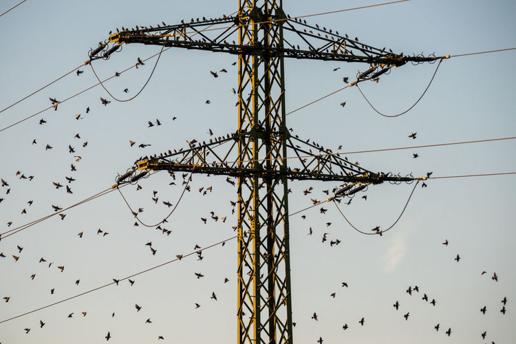 Gathering for a journey... Sky Low Angle View Metal Electricity  Nature Electricity Pylon Connection Cable Fuel And Power Generation Power Line  Power Supply Outdoors Tall - High Dusk Clear Sky Complexity Electrical Equipment Flock Of Birds Sturnus Vulgaris Starling Birds Bird Migration Migration Atmospheric Mood Wildlife Photography