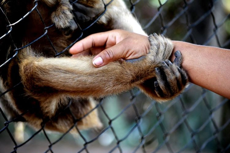 Human Hand One Animal Close-up Monkey Zoo Prison 😚