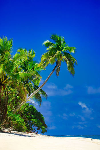 Tropical Island with a paradise beach and palm trees, Fiji Islands Beach Tropical Island Palms Fiji Day Daylight Daytime During Exterior Exteriors Island Islands Levu Lined Nobody Oceania Oceanica Outdoor Pacific Palm Palm-lined Photo Photos Sandy Shot Shots South Strand Strands The Tree Trees Traumstrand Fidschi Fidschi-Islands Fiji-Islands Holidays Vacation Relax Relaxing Dream Dream Beach Caribbean Caribic  Sky Plant Tropical Climate Land Blue Palm Tree Beauty In Nature Scenics - Nature Nature Tranquility Tranquil Scene Growth Sand No People Sea Idyllic Water Outdoors Coconut Palm Tree Tropical Tree