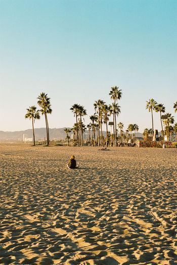 Alone Analogue Analogue Photography Cali California California Sunshine Ishootfilm Los Angeles, California Nature Palms View Analog Beach Blue Day Film Photography Filmisnotdead Hedonism Losangeles Ocean Sand Sky Sun Sunshine West Coast California Dreamin
