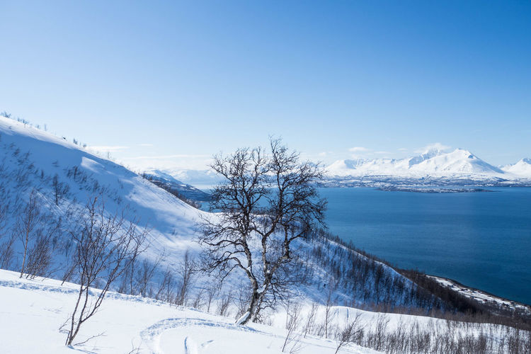 Skitouring in Lyngen Alps Beauty In Nature Blue Cold Temperature Covering Fjord Idyllic Landscape Majestic Mountain Mountain Range Nature Non-urban Scene Norway Outdoors Scenics Skiing Skitouring Snow Snow Covered Snowcapped Mountain Tranquil Scene Tranquility Tree White Color Winter
