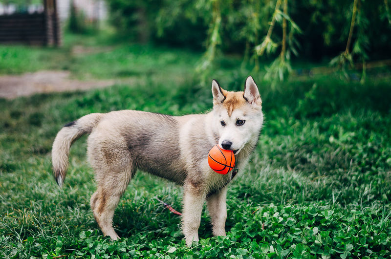 Dogs Landscape_Collection Nature Nature Photography Nikon Russia Animal Animal Themes Beauty In Nature Day Dog Dog Love Domestic Animals Focus On Foreground Grass Green Color Landscape Landscape_photography Nature Nature_collection No People One Animal Outdoors Pet Pets