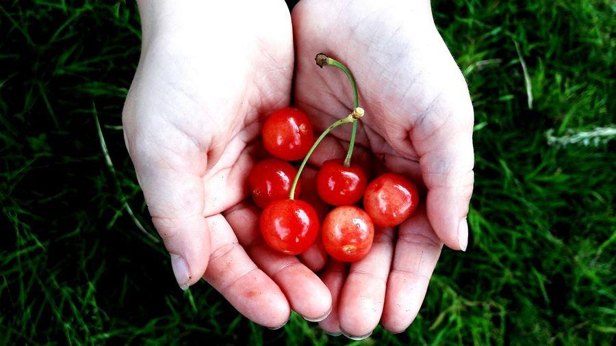 Spring Springtime Spring Has Arrived Spring 2016 Summer Summertime Summer Is Coming Cherry Cherry Tree Cherries Cherries🍒 Cherrys Hand Hands Hands Child Children Child