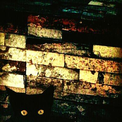 Bahrain Wall Cat Hidden Artistic Animals SAMSUNG GALAXY S4 ZOOM