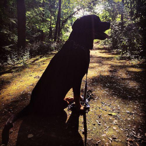 Rottweiler Rottielove Rottie Dogs Of EyeEm Dogoftheday Dogstagram I Love My Dog Great Atmosphere Rottweilerlife