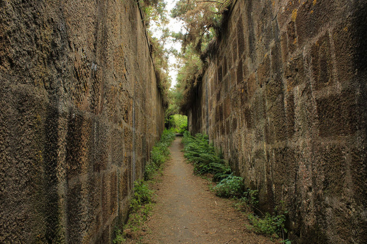 Alley Architecture Day Diminishing Perspective Direction Dirt Empty Footpath Forest Growth Land Narrow Nature No People Outdoors Plant Road The Way Forward Trail Tranquility Tree Wall