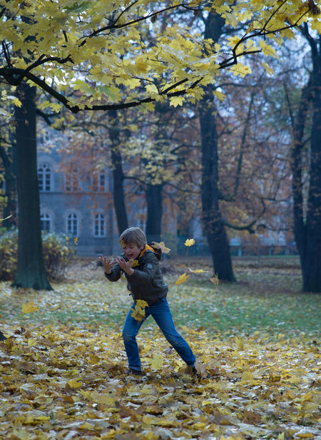 Little blond boy playing with autumn leaves in park Alone Autumn Autumn Blond Childhood Memories Color Day Full Length Germany Hapiness Happy Child  Jumping Leaf Leaves Nature One Person Outdoor Outdoors Park Park - Man Made Space Playful Real People Running Tree Young Adult