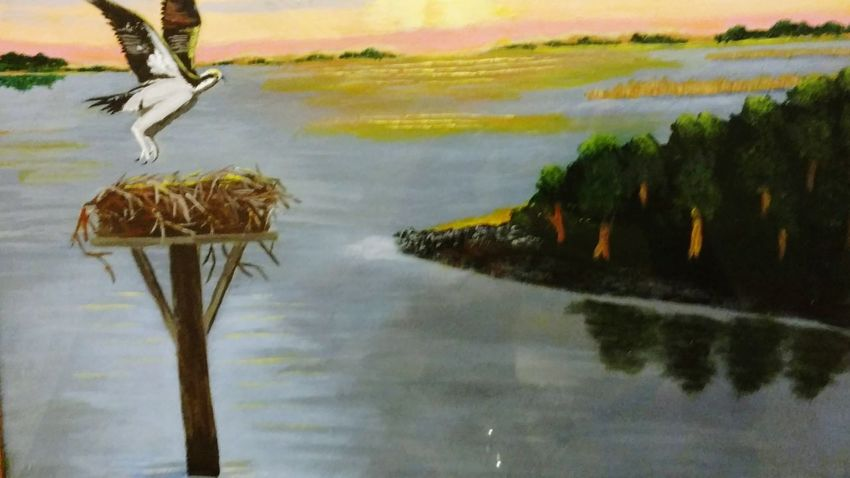 Ospreys, Ospreys Nesting, Birds Nesting, Birds, Landscape Scenics Animals In The Wild Beauty In Nature Sky Water Reflection Lake Nature Outdoors Animal Wildlife No People Tree Bird Day My Oil Paint Artwork MoncksCorner ,SC. Sommergefühle EyeEm Selects