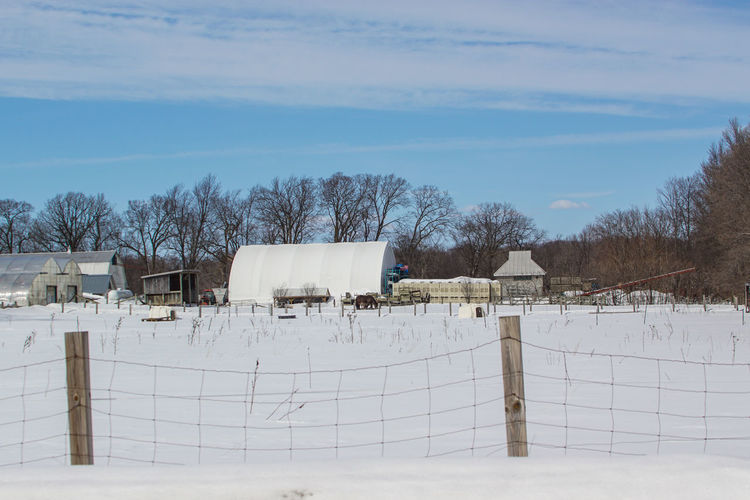The farm 50-500mm Cold Weather Ecomusee Farm Farm Life Snow ❄ Tourist Attraction  Trees Winter Wintertime Zoo Animal Themes Canada Coast To Coast Clouds Cold Cold Days Cold Temperature Ecomuseum Sky Snow Sony A68 Tourist Destination Travel Destinations Winter Trees Winter Wonderland
