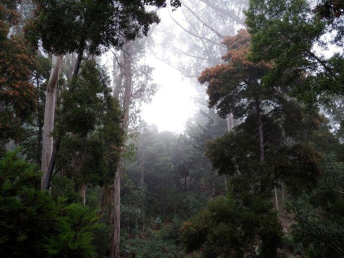 a soft fog