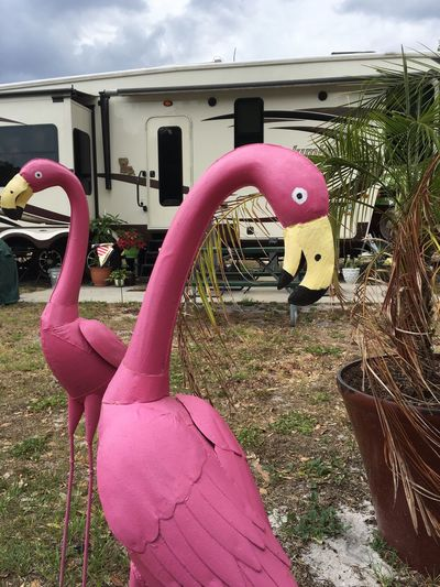 Outdoors Pink Color Day No People Sky Close-up Americana Scenes Flamingo Yard Art Metal Birds Florida Life Florida Rv Park Live For The Story Been There.