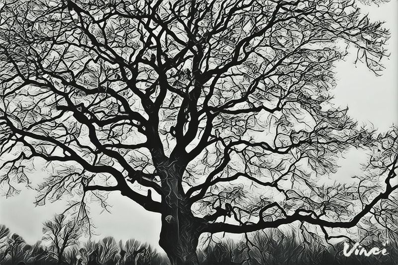 Herrenkrugpark Vinci App Blackandwhite Monochrome Sky Low Angle View Beauty In Nature Outdoors Landscape Scenics Treetop Backgrounds Bare Tree Tranquility TreePorn Hugging Tree Take A Walk Showcase February 2017 February 2017 Winter 2017 Forest Creepy Tranquility Silhouette Beauty In Nature