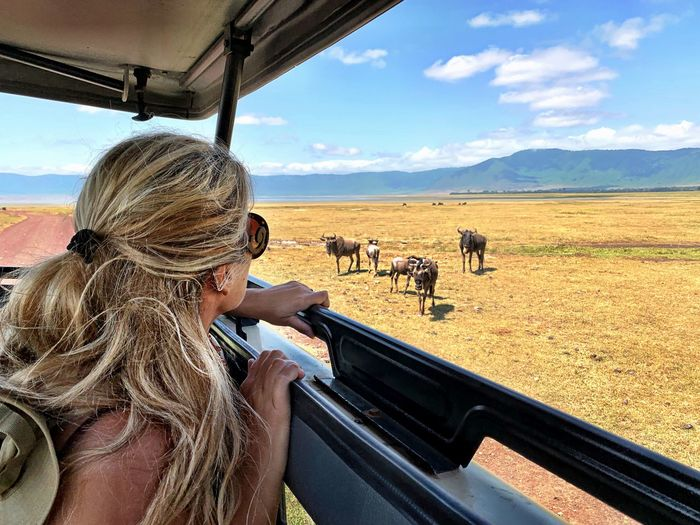 Side view of woman looking at wildebeest