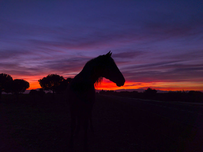 Animal Themes Beauty In Nature Cloud - Sky Day Domestic Animals Field Horse Photography  Landscape Mammal Nature No People One Animal Orange Color Outdoors Scenics Silhouette Sky Sunset Tree