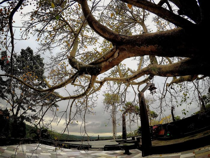 Branches Gopro