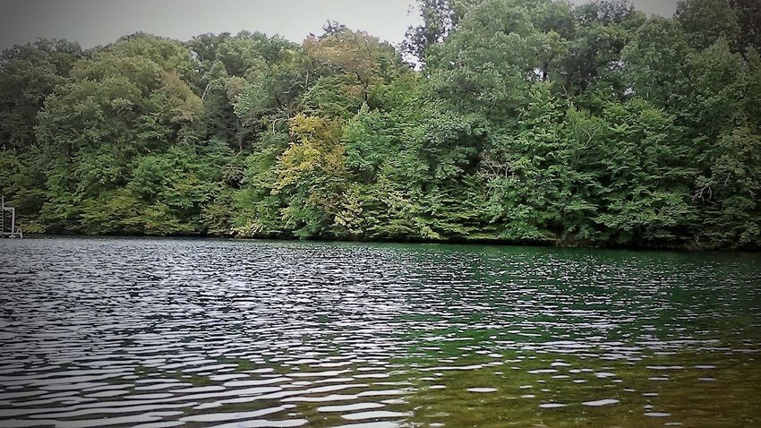 Green Color No People Water Nature Day Outdoors Tree Lake Growth Beauty In Nature Autumn In Indiana Hometown Love Extraordinary  Autumn Collection Beauty In Nature Tree Nature Growth Countryside Glamour Ruralamerica Autumn Freshness