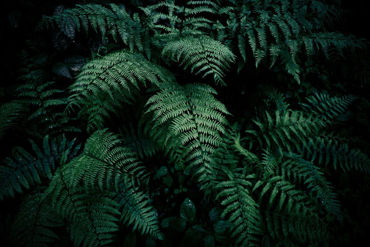 Background Backgrounds Beauty In Nature Close-up Day Fern Forest Fresh On Eyeem  Freshness Freshness Full Frame Green Green Color Green Color Growth Leaf Nature Nature Nature_collection No People Outdoors Plant Rain Rainy Days Tree Perspectives On Nature