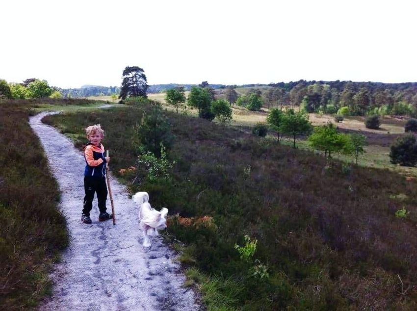 Brunssumerheide Nature Outdoors Lost In The Landscape