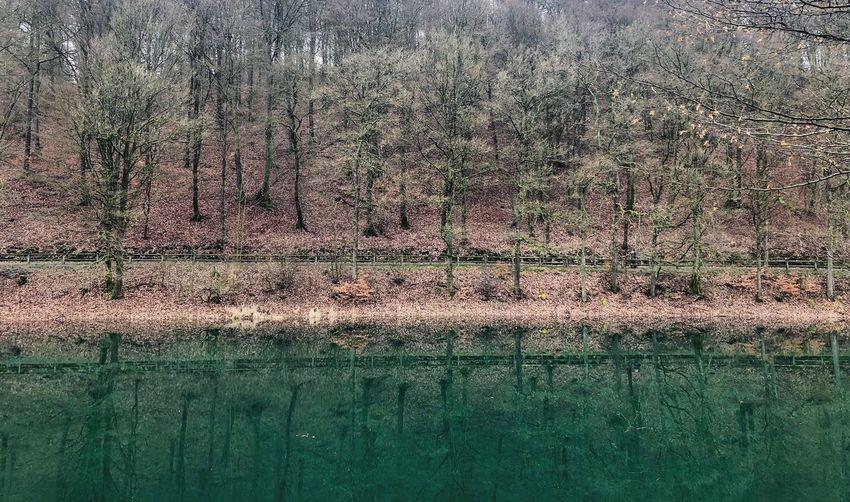 •green• Lake