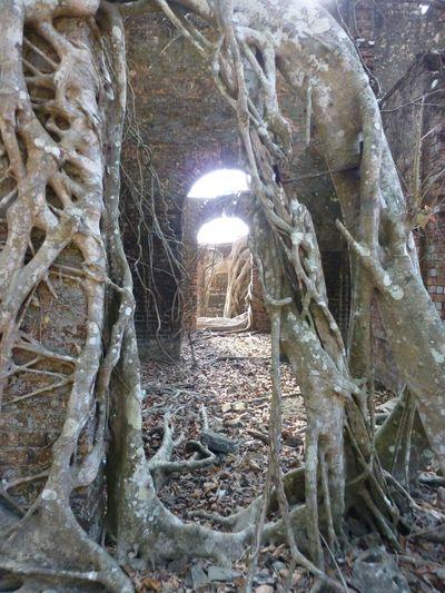 Door Roots Ruin