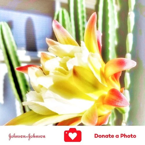 Special effects on a catus flowering plant color inhanced Flower No People Day Close-up Flower Head Nature Beauty In Nature Johnson And Johnson Donate A Photo Donate J&j To Better Lives Johnson & Johnson Donate To Help Plants Photography Special Effects Collection Color Enhanced Growth Catus Flower Catus Plant Outdoors Nature