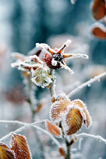 Close-up of insect on frozen plant