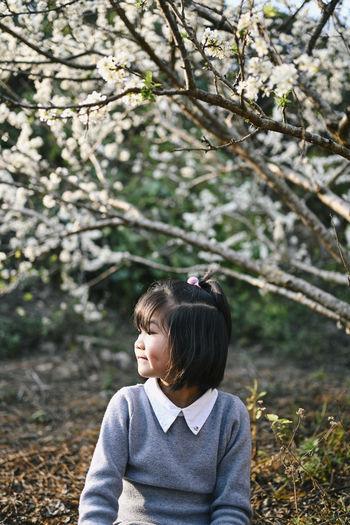 Portrait of a girl looking away in plum blossoms garden