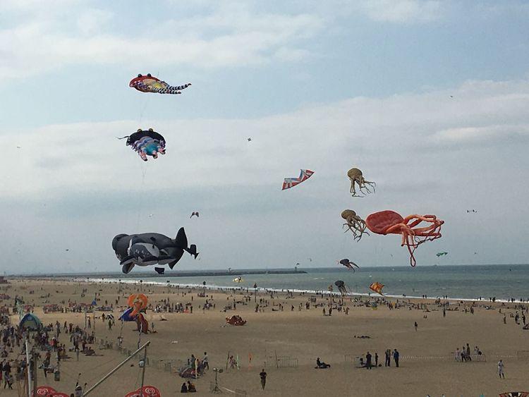 Kites at the beach, sea life in the air SScheveningen bBeachKKiteseEnyoing The View eEnjoySSealife