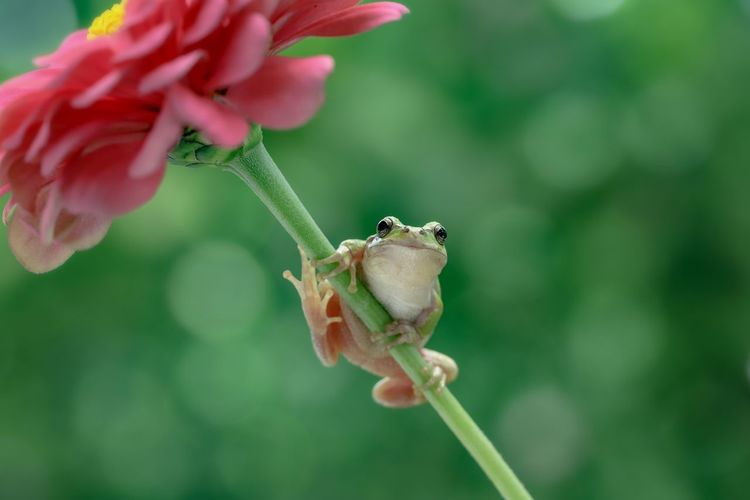 For you 🌸🐸