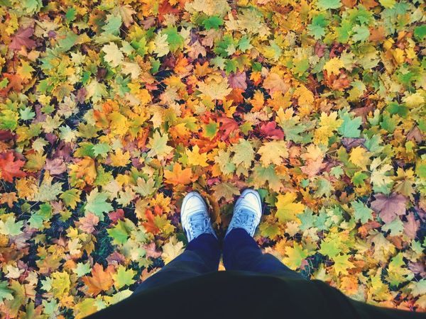 Low Section Leaf Autumn Change Standing Personal Perspective Season  Person Shoe Dry Leaves Ground Yellow Field Natural Condition Day Footwear Multi Colored Fallen Boot
