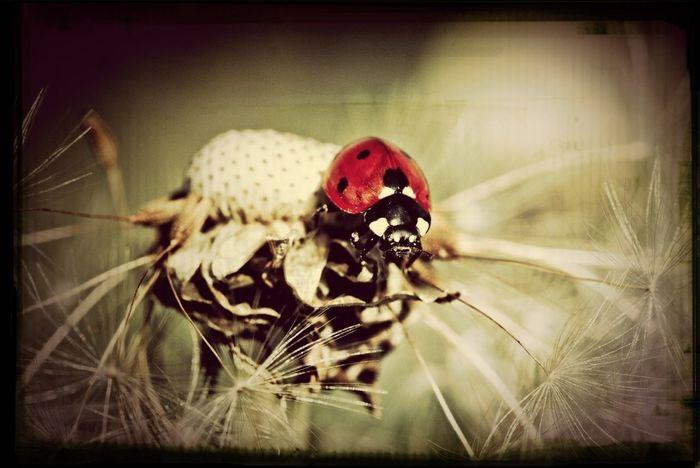 Bugs Makro Taking Photos Photography