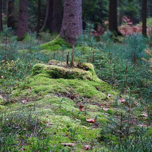 Wald Miniatur Skyline Nofilter Wald Naturgram Lüneburgerheide Natur Wood Waldboden