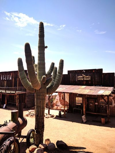 Goldfield Arizona Arizona Sky Hot Weather Desert Life No People Ghost Town Kenopsia Cactus Cacti