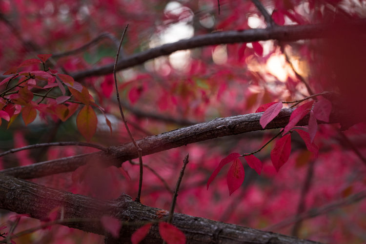 Branches Red