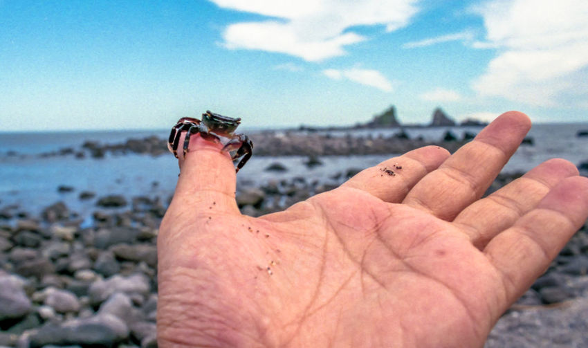 Person watching crab crawl on his finger in front of rock and sea