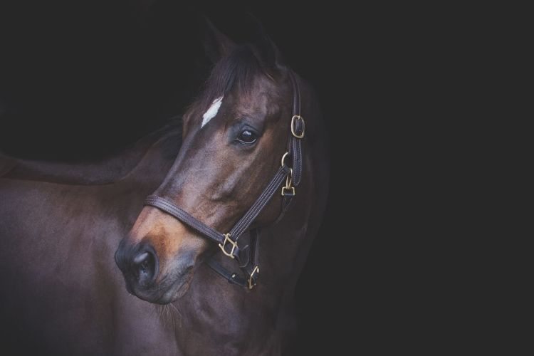 Horse EyeEm Selects Portrait Headshot Copy Space Black Background One Animal