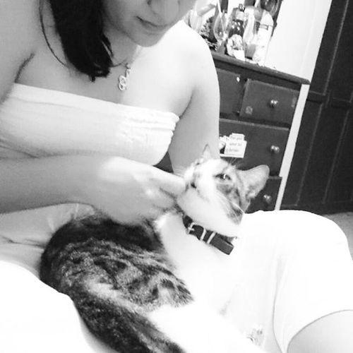 No conoce el amor libre y sin ataduras, el que no ha tenido un gato!! CodyTheCat Adoptanocompres Rescatado Catlover Purrr