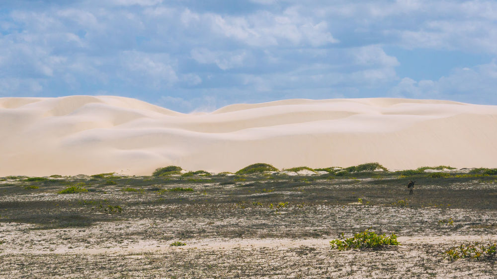 The beautifully wind shaped dunes of Lencois Maranhenses. Animal Animal Themes Animals In The Wild Arid Climate Beauty In Nature Cloud - Sky Day Desert Donkey Dry Horizon Over Land Landscape Nature No People Outdoors Sand Sand Dune Scenics Sky Sun Tranquil Scene Tranquility Travel Travel Destinations Traveling The Great Outdoors - 2017 EyeEm Awards EyeEmNewHere Lost In The Landscape