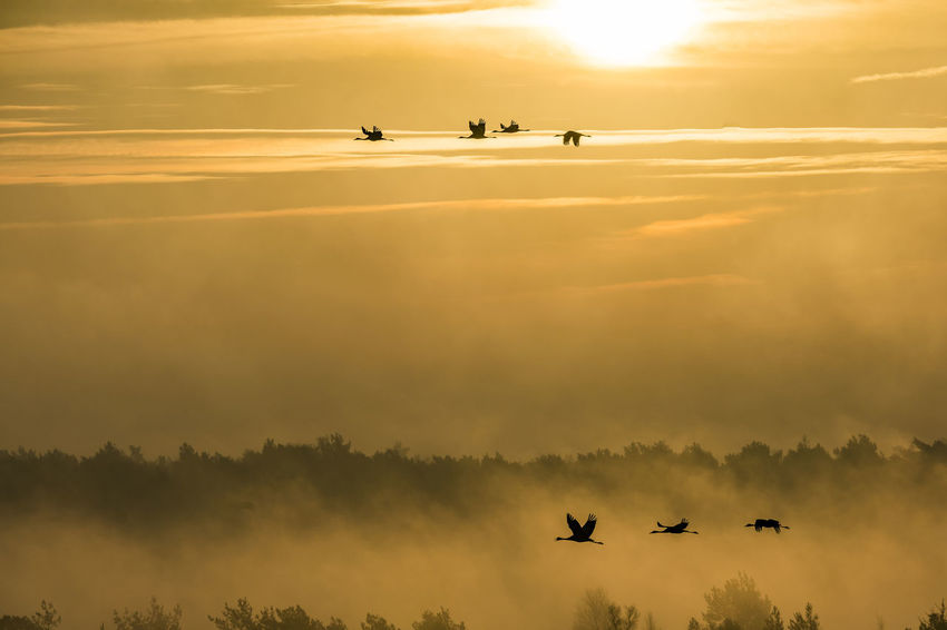 Sunrise at Tister Moor Animal Themes Beauty In Nature Bird Day Flying Landscape Migrant Birds Nature Outdoors Sky Sunrise