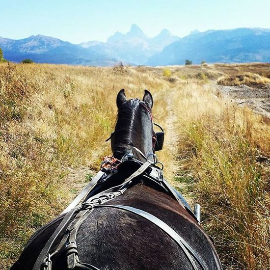 Perfect way to end the morning with my dad and my two littles! Tetonvalley Tetons CountryLivinG Morgans Horsesofinstagram Brennarose Zevincarlos Princess Thelittlestcowboy Wagonride Papasboy Wells Medinas Trwranch