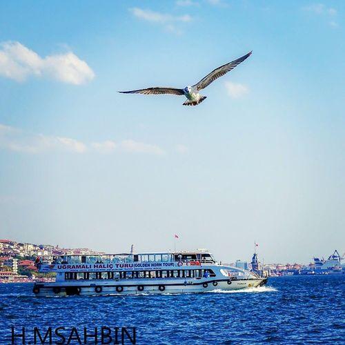 صباح الخير لمتتبعي الصحة تصويري  في مدينة اسطنبول Good morning Fans My shot in Istanbul city libyan turkey