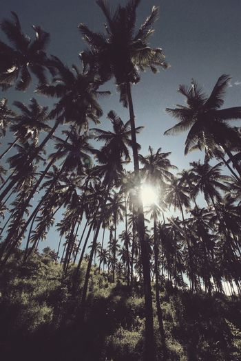 Summer Memories 🌄 Nature Beauty Coconut Trees Good Morning EyeEm Manado Manado Hanging Out Nice Weather