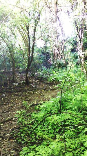 Forest First Eyeem Photo
