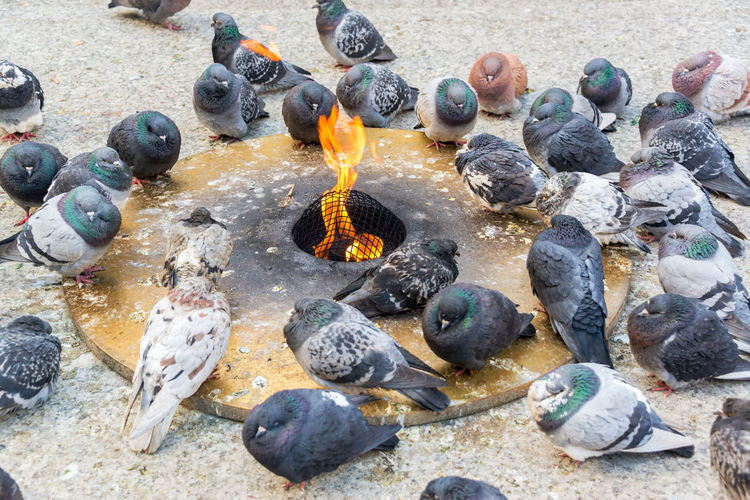 High angle view of pigeons perching by fire pit