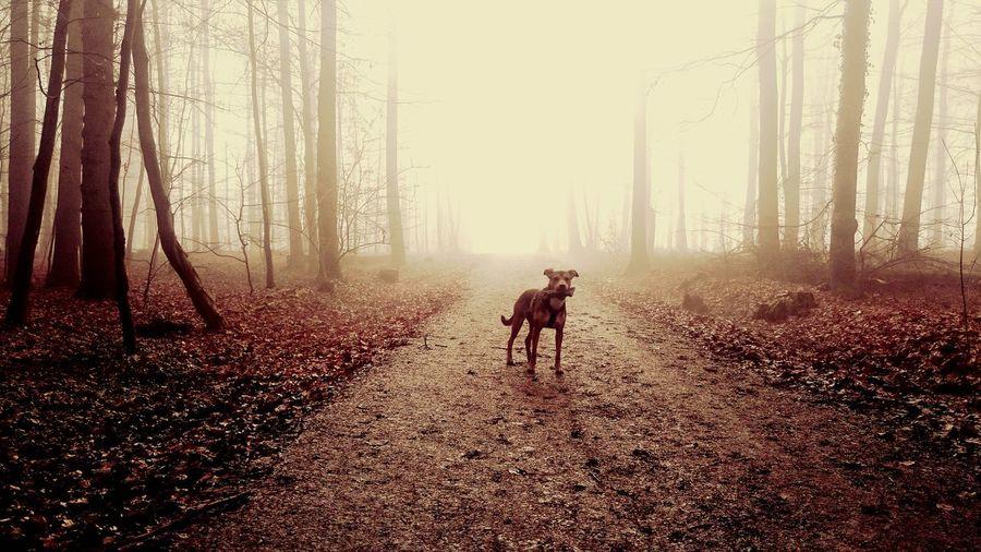 The Magic Mission Dogs Life Doglovers Dogmodel Dogslife Dogphoto Fog