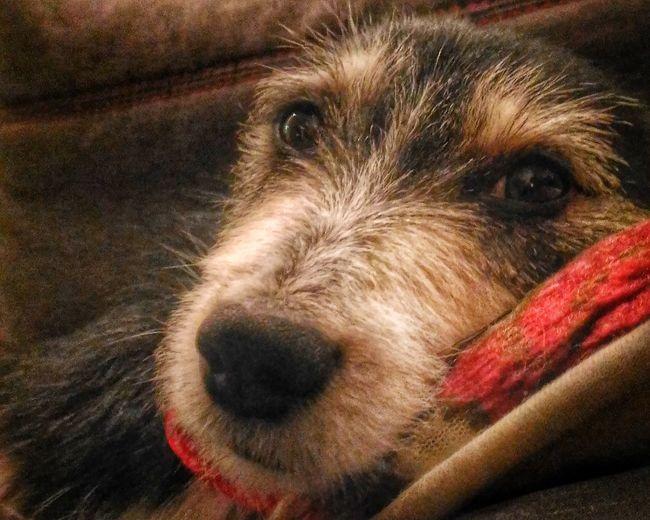 Hello world Dog Animals love